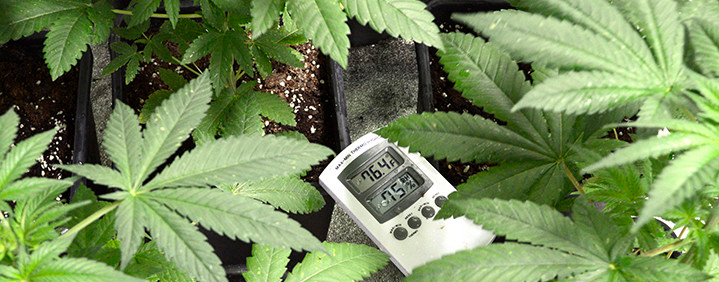 The Best Temperature & Humidity Controllers For Grow Rooms