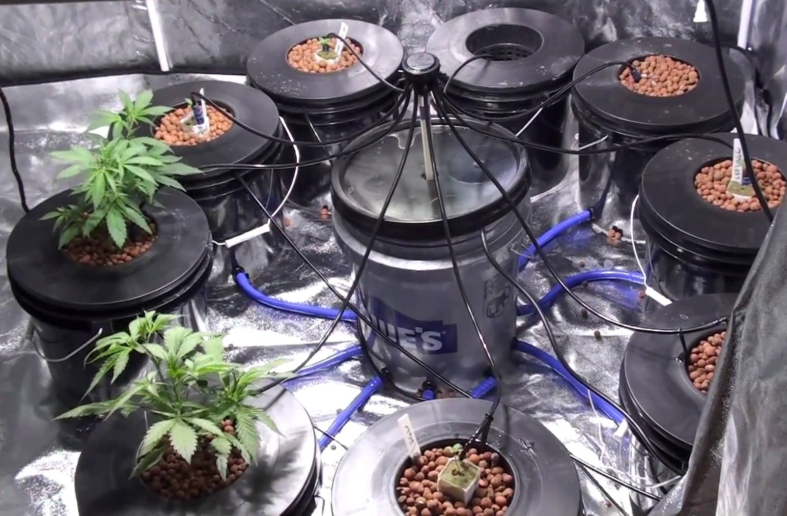 How To Grow Weed Indoors For Beginners The Ultimate Guide